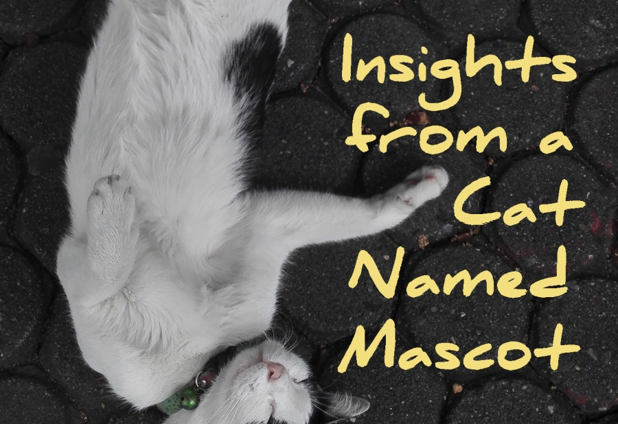 The Provisions of God: Insights From A Cat Named Mascot